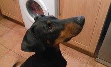 Can you give Zues a forever home?